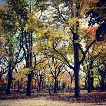 Beautiful Trees in Central Park
